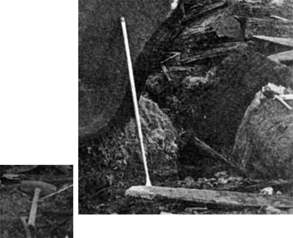 Closeup of portion of photo of 'Mark Twain Redwood'