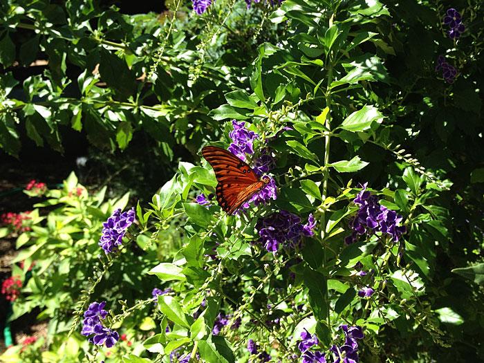 Photo - Butterfly Garden