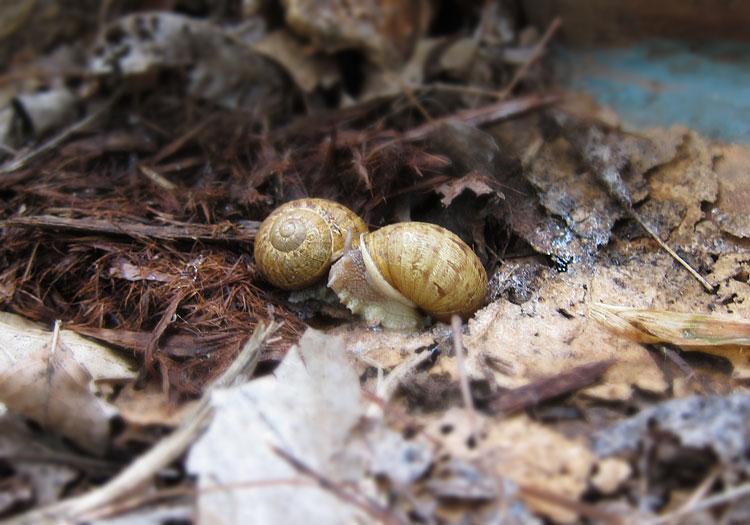 Photo - Snails