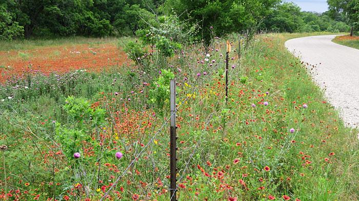 Wildflower-filled pasture
