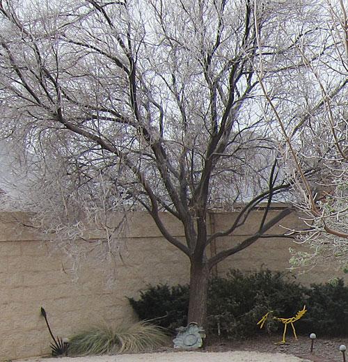 Tree on 12/31/14