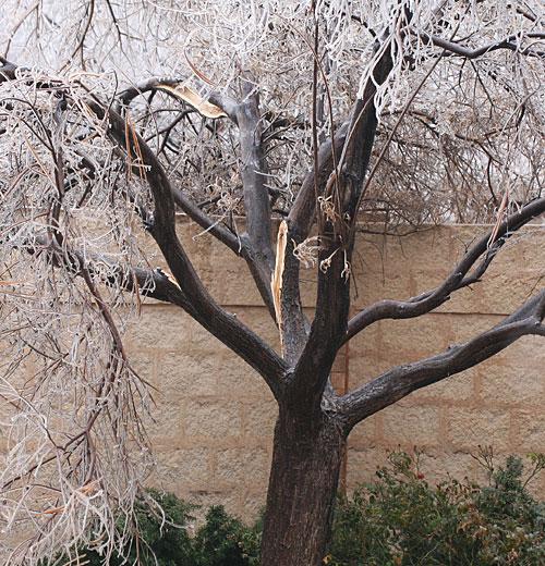 Tree on 1/2/15