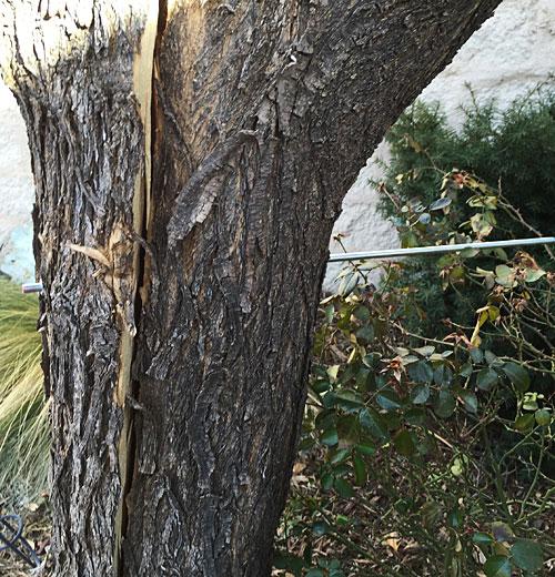 Tree on 1/16/15