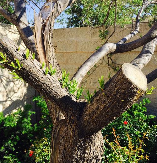 Tree on 4/29/15