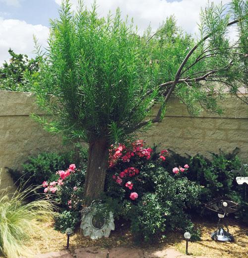 Tree on 6/21/15