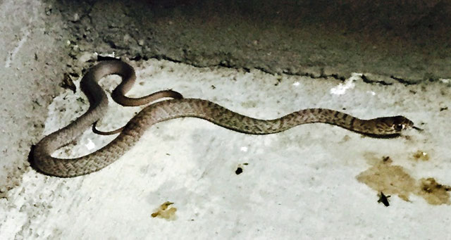 Small snake in our garage