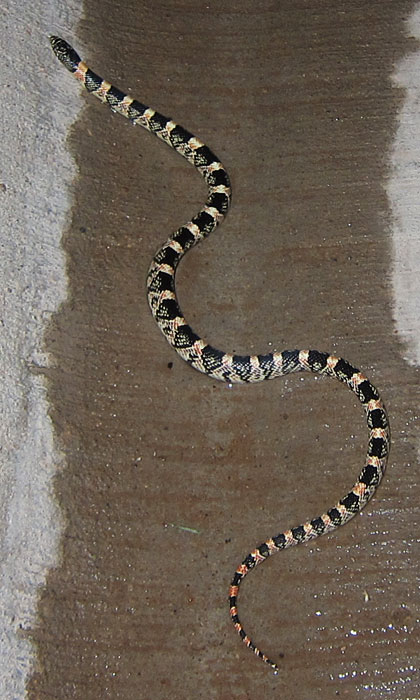 Photo - Young snake