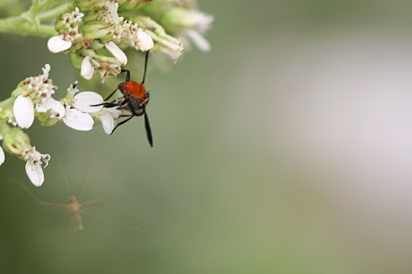 Photo of insect on flowers