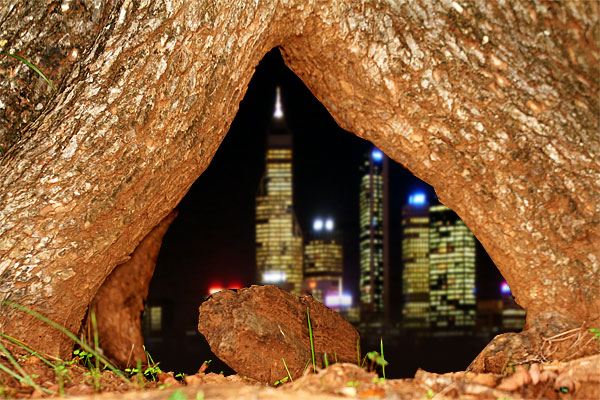 Photo of a tree trunk with a city skyline inside