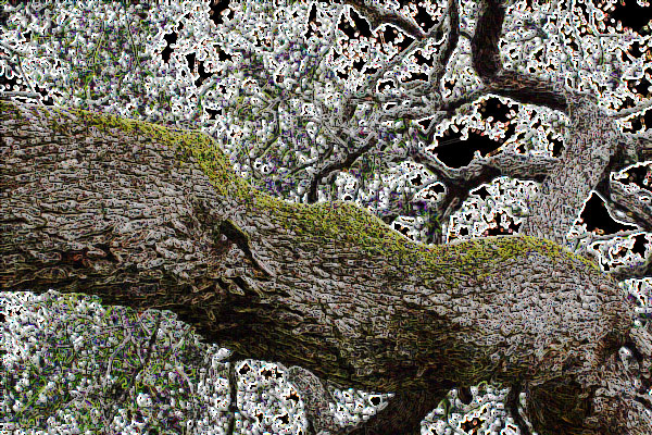 Photo of a moss-covered tree limb