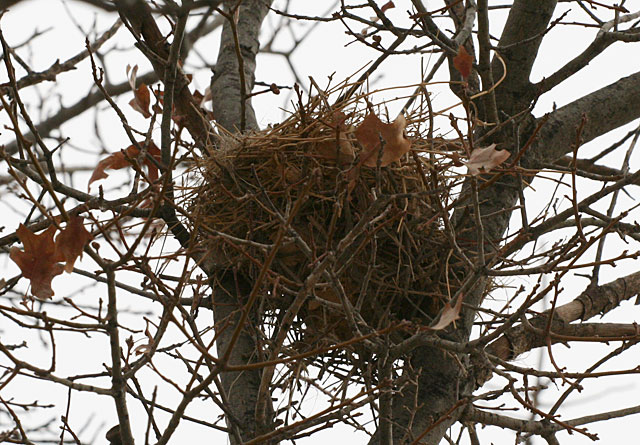 Photo of a bird nest