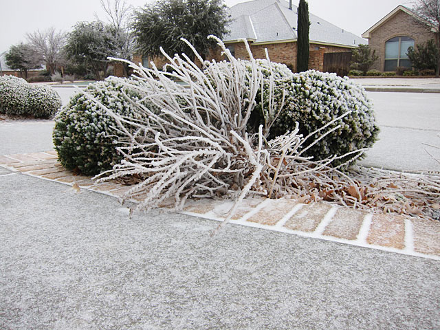 Photo of an ice-covered plant