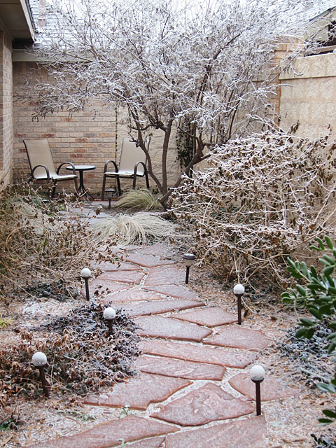 Photo of an ice-covered yard