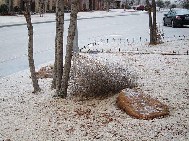 Photo of an ice-covered tumbleweed
