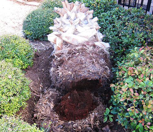 Photo - palm tree trunk lying prone