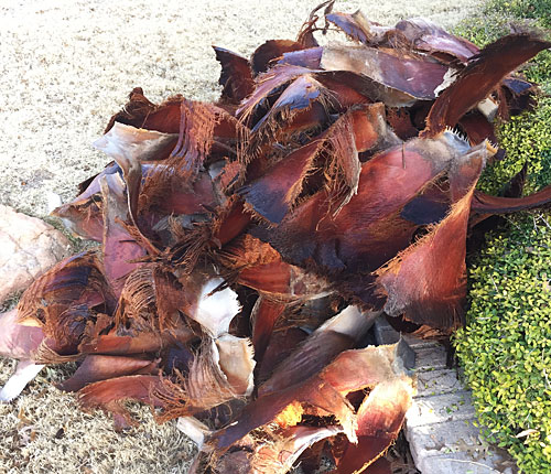 Photo - pile of dried palm fronds