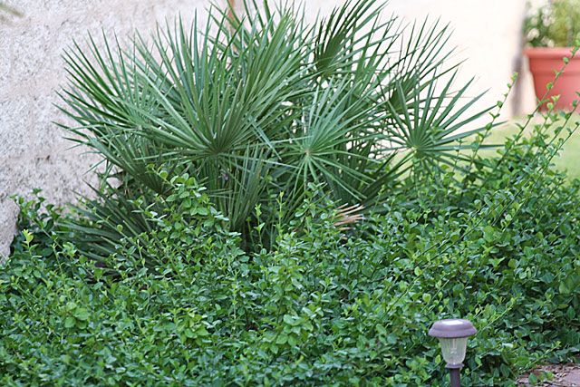 Photo of palm tree and ground cover