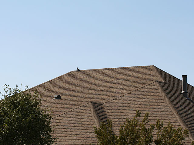 Photo - Quail on top of roof