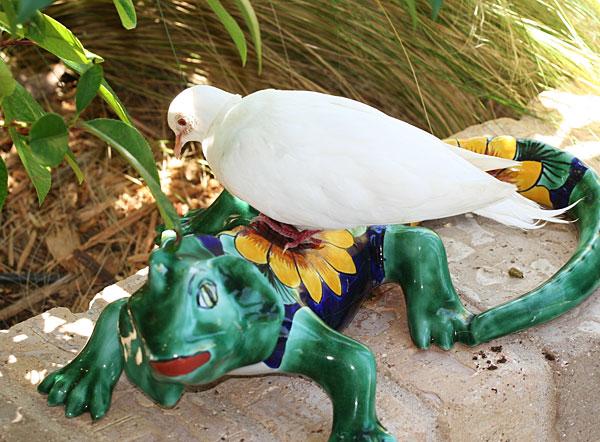 White dove atop ceramic iguana