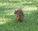 This tree squirrel seems to be pretty disgusted by this turn of events