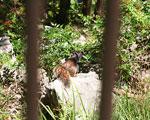 Adult rock squirrel in its more normal habitat